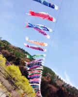 南八ヶ岳 花の森公園の鯉のぼり